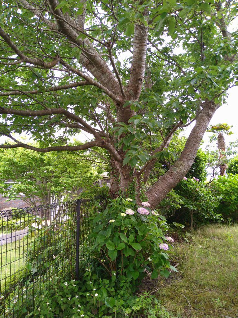 庭の木の根っこが室外機に到達